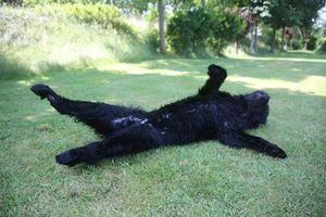 Hundeerziehung ohne Stress?