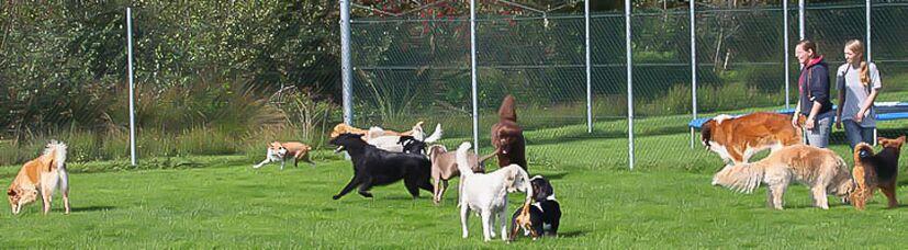 Gemischte Hundegruppe beim Spielen.