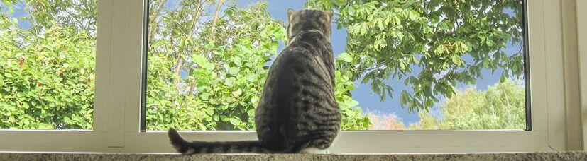 Eine Katze genießt den Ausblick auf die Natur in unserer Katzenpension.