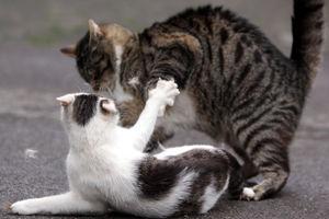 Revierstreitigkeiten bei Katzen