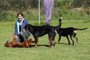 Eine junge Frau spielt und schmust mit zwei Hunden.