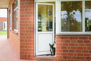 Ein kleiner Hund drängelt sich durch die halb geöffnete Tür.