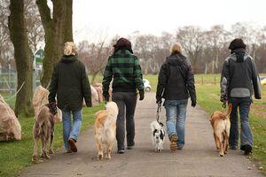 Vier Hunde gehen nebeneinander ordentlich bei Fuß.