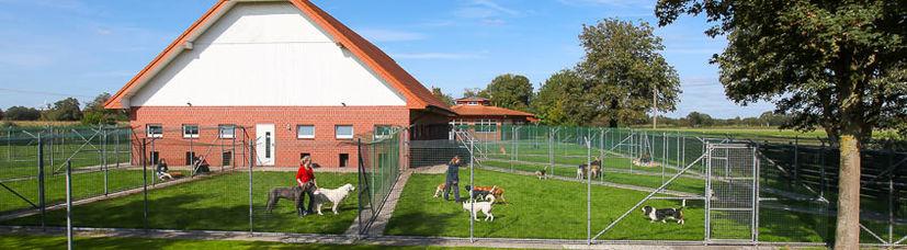 Spielende Hunde in den großzügigen, begrünten Außenbereichen einer Hundepension.