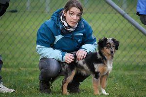 Eine junge Frau hockt neben einem Australian Shepherd-Welpen.