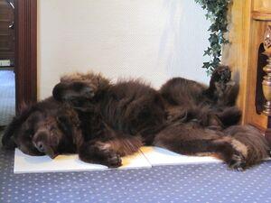 Ein Hund liegt auf dem Rücken und schläft.