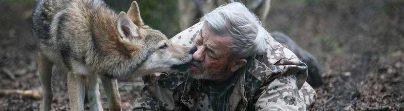 Ein junger mongolischer Wolf knabbert am Mund von Wolfsforscher Werner Freund.