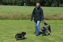 Den Artikel lesen: Abgeleinter und angeleinter Hund