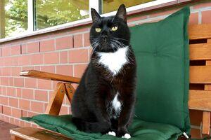 Eine schwarz-weiße Katze sitzt auf einem Stuhl mit grünem Kissen.