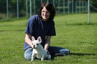 Eine junge weiße Französische Bulldogge wird von einer Frau gestreichelt.