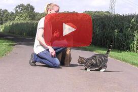 Ein Airedale Terrier sitzt ruhig neben einer Katze.