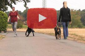 Ein Entlebucher Sennenhund geht an lockerer Leine an einem ziehenden Schäferhund vorbei.