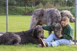 hundepension-grosse-hunde