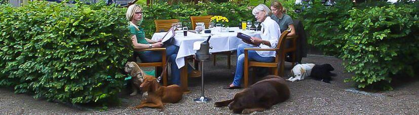 Fünf Hunde liegen ruhig im Restaurant neben dem Tisch.