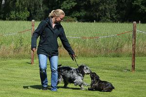 Ein freilaufender Hund rennt an einen angeleinten Hund heran.