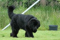 Den Artikel lesen: Großer Hund in Wohnung