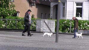 Ein Spitz geht an lockerer Leine an einem ziehenden Hund vorbei.
