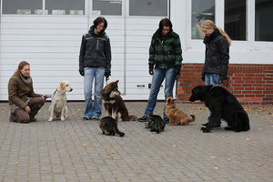 Vier Hunde sitzen artig neben Menschen, während vor ihnen zwei Katzen sitzen.