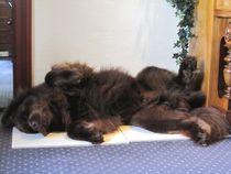 Den Artikel lesen: Wieviel Ruhe braucht ein Hund?