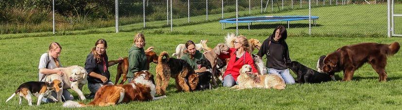 Unsere Hundetrainer beim Hundetreff.