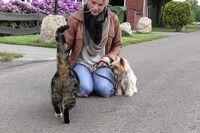 Ein Yorkshire Terrier sitzt ruhig neben einer Frau, die eine Katze streichelt.