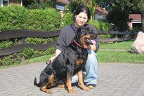 Rottweiler aus Schwerin