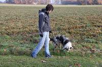 Australian Shepherd beim Spazierengehen