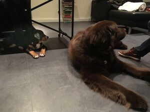 Ein großer und ein kleiner Hund liegen nebeneinander.