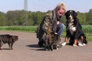 Ein großer Hund sitzt ruhig neben einer Katze.