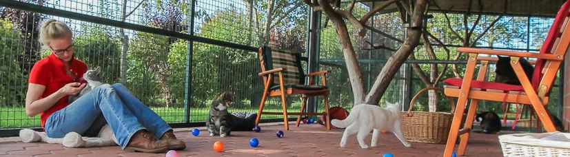 Die großzügigen, überdachten Außenbereiche unserer Katzenpension