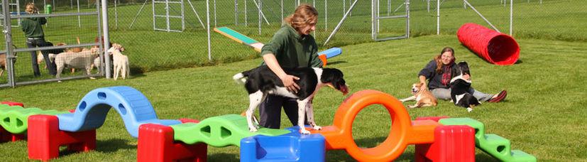 Ein Welpe wird von einer Hundetrainerin über unseren Lernparcours geführt.