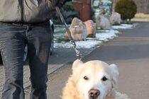 Den Artikel lesen: Vermenschlichung in der Hundeerziehung