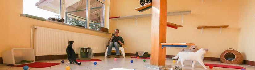 Die großzügigen, beheizten Innenräume unserer Katzenpension