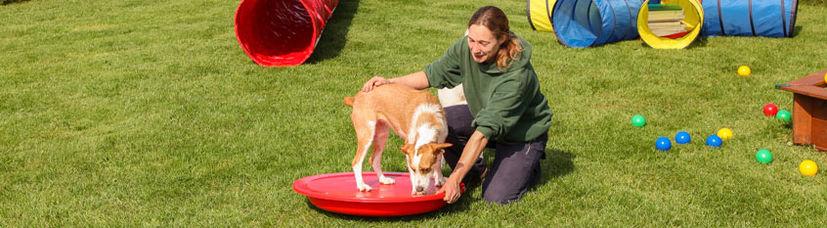 Ein Welpe wird von einer Hundetrainerin auf dem Balancierkarussell unterstützt.