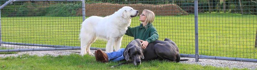 Eine junge Frau schmust liebevoll mit zwei großen Hunden.