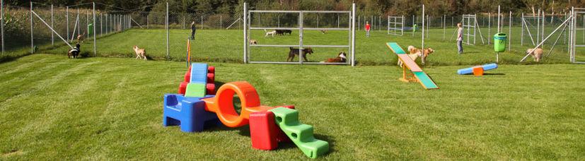 Viele Hunde spielen auf einem großzügigen Hundeplatz.