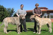 zwei Irische Wolfshunde aus Hamburg und Verden