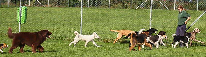 Hundespielgruppe unter Aufsicht einer Hundetrainerin.