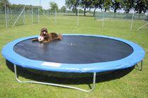 Den Artikel lesen: Ein großes Trampolin für Hunde