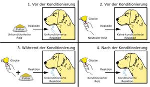 Grafiken erklären nach Pawlow die klassische Konditionierung.