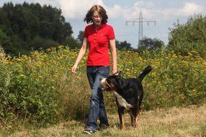 Ein großer Hund schaut aufmerksam zur Hundetrainerin auf.