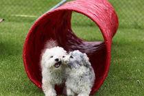 Den Artikel lesen: Hundetreff jetzt auch für kleine Hunde