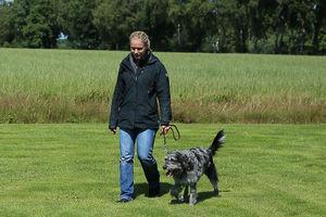 Ein Mensch führt einen Hund an der Leine.