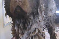 Den Artikel lesen: Hund stinkt, müffelt, riecht schlecht