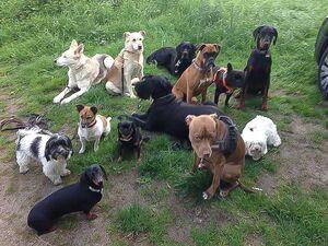 Eine große Gruppe verschiedener Hunde sitzt ruhig beieinander.
