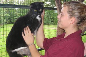 Eine schwarz-weiße Katze genießt die Streicheleinheiten einer blonden Frau.
