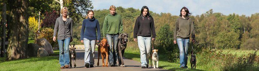Fünf Hunde gehen an an lockerer Leine bei Fuß.