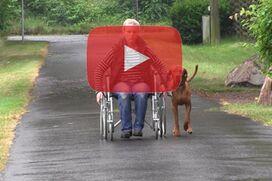 Ein Magyar Vizsla geht an lockerer Leine neben einem Rollstuhl.
