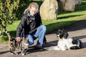 Ein großer Münsterländer liegt entspannt neben einer Katze.