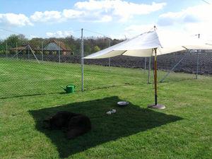 Neufundländer Lohmann liegt entspannt im Schatten eines Sonnenschirms.